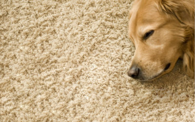 To carpet or not to carpet…. That is the question!